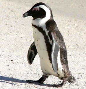 The Penguin is Native to Pittsburgh